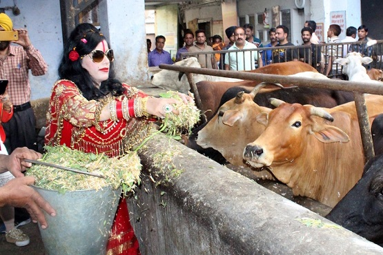 Amritsar: Self-styled godwoman Radhe Maa feeds cows at a cowshed in Amritsar on April 11, 2017. (Photo: IANS)